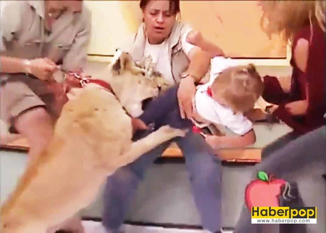 Aslan-bebeğe-canlı-yayında-saldırdı,-annesi-gülerek-izledi-video