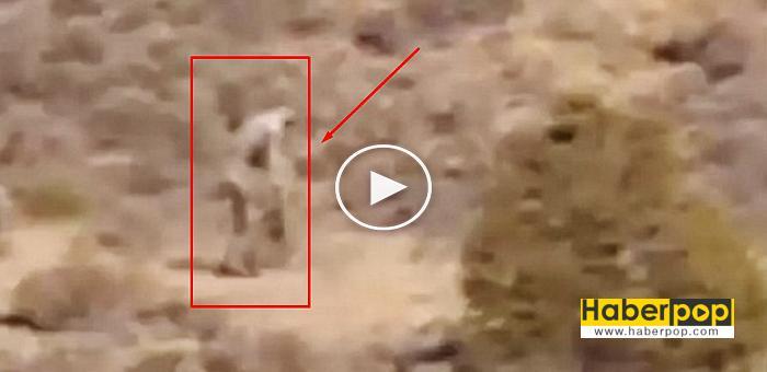 Çölde-dolaşan-chupacabra-iddiası-video-izle-video