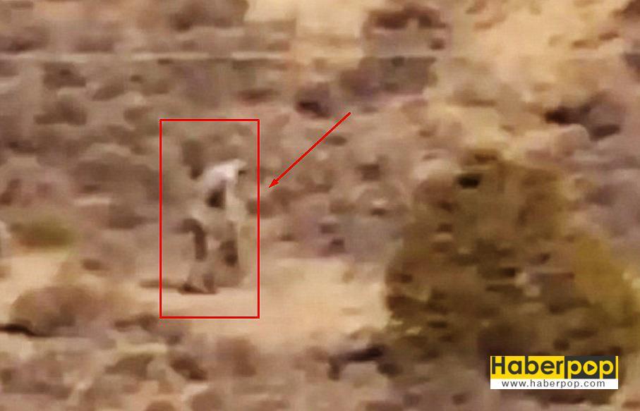 Çölde-dolaşan-chupacabra-iddiası-video-izle