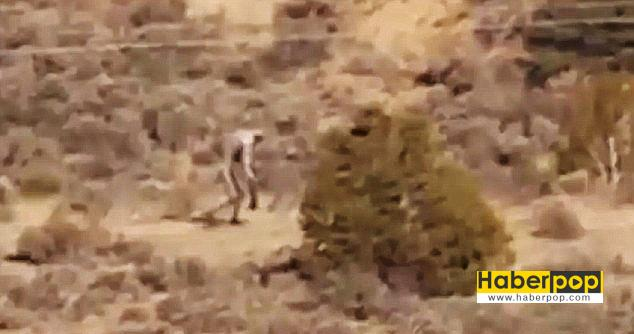Çölde-dolaşan-chupacabra-iddiası-video