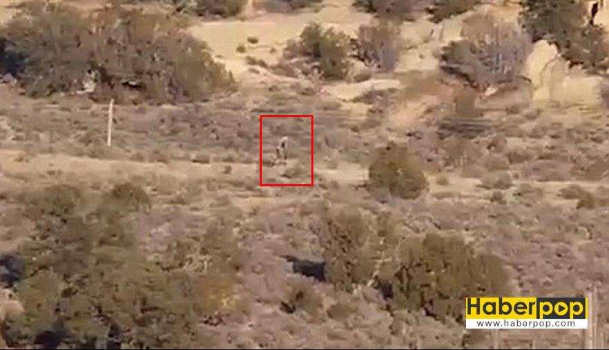 Çölde-dolaşan-chupacabra-iddiası-videosu