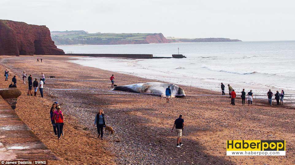 dev-balinayi-sahilde-testereyle-kestiler-video