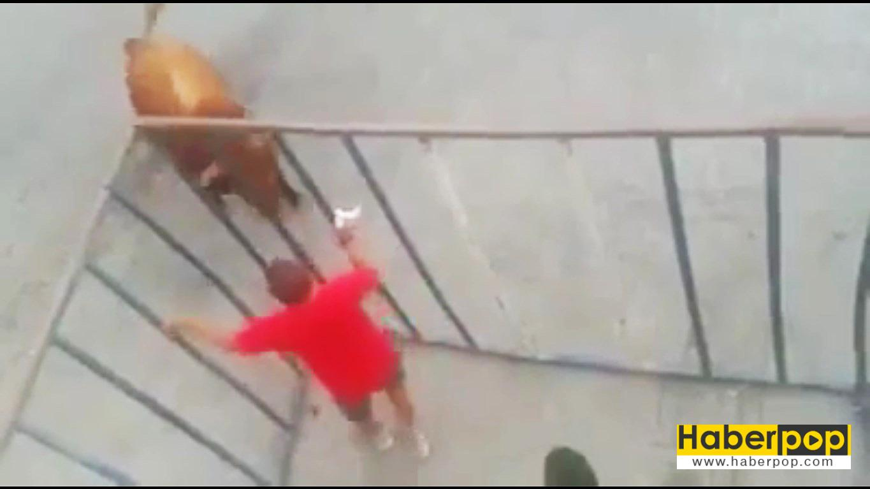 Öfkeli-boğa-kafesteki-adamı-perişan-etti-video