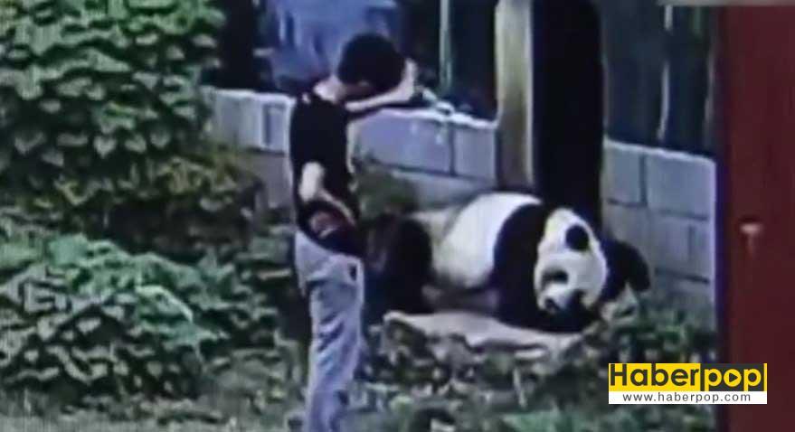 panda-kafesine-izinsiz-giren-adami-boyle-kovaladi-video