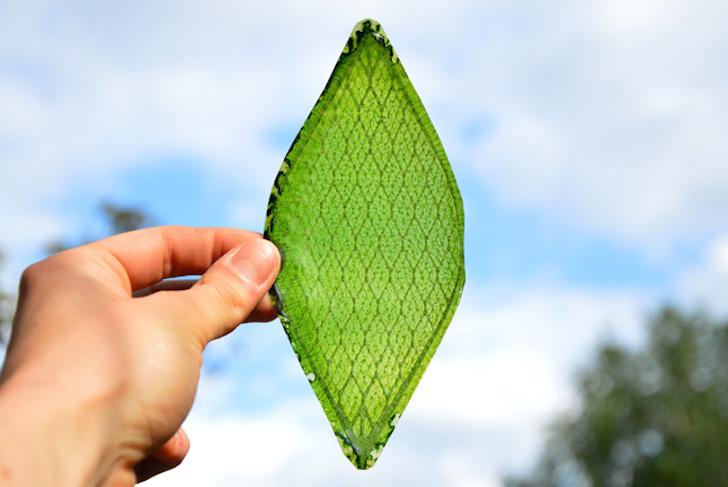 Silk-Leaf-by-Julian-Melchiorri