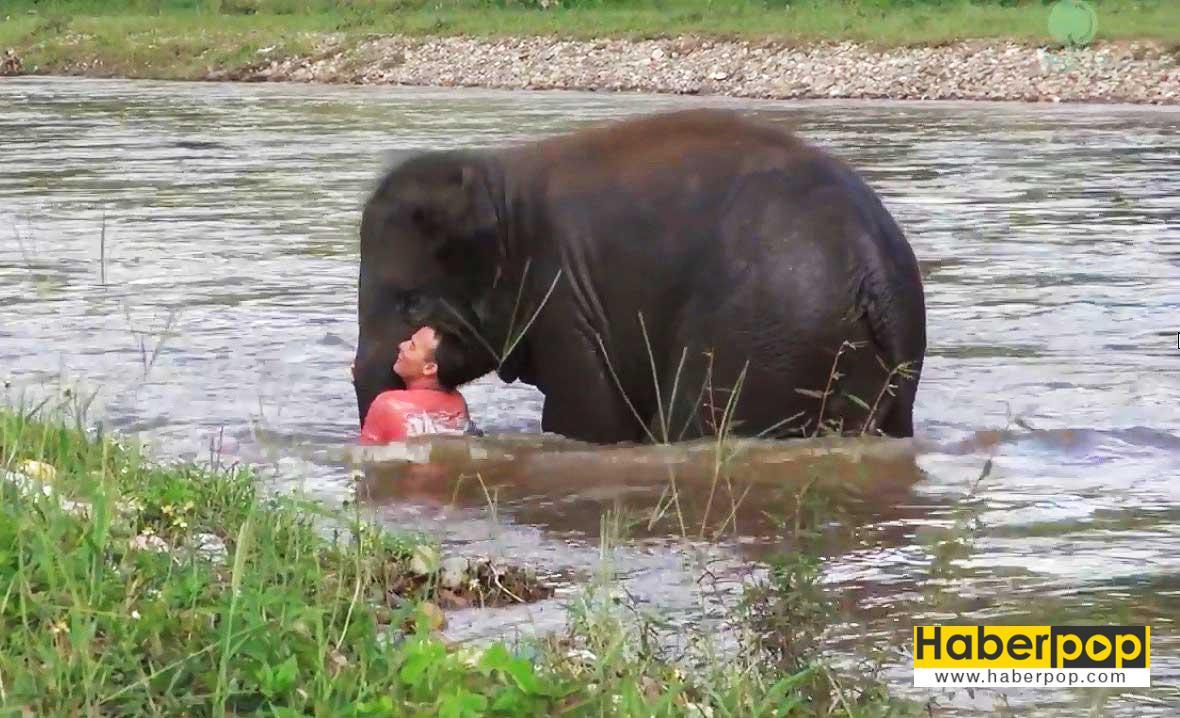 suda-bogulmak-uzere-olan-adami-fil-kurtardi-video