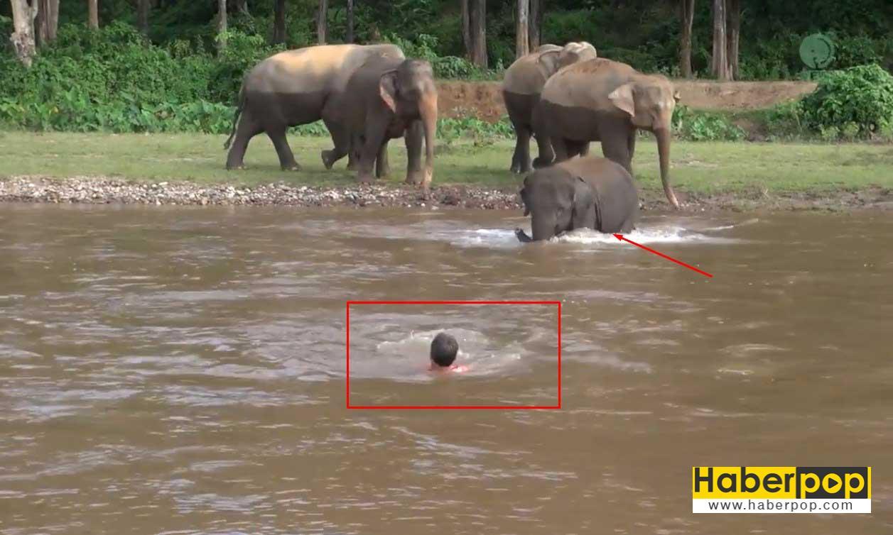 suda-bogulmak-uzere-olan-adami-fil-kurtardi