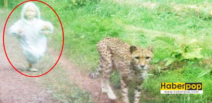 Vahşi-çitayı-kovalayan-çocuk-tıklanma-rekoru-kırıyor-tuhaf-haberler