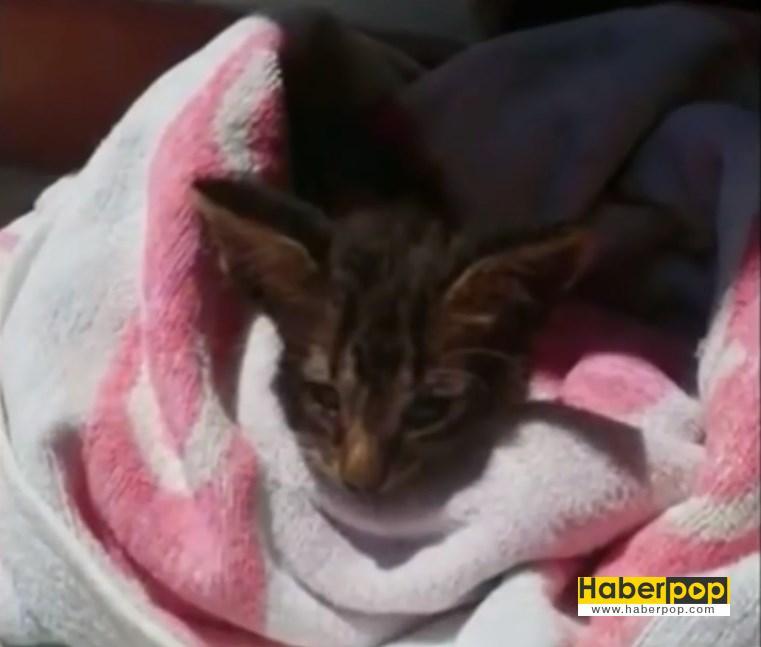 Yavru kedi suni tenefüsle kurtarıldı video