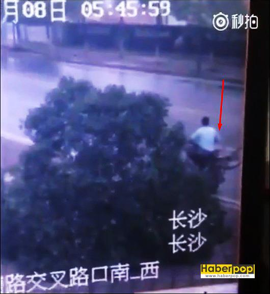 bisikleti-çalmak-için-ağacı-kesen-adam-videosu