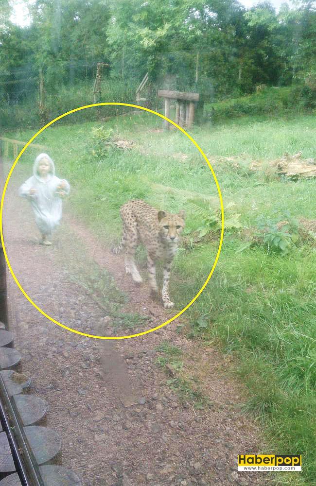 çitayı-kovalayan-çocuk-tıklanma-rekoru-kırıyor