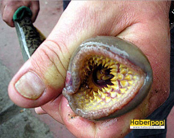 delik-fobisi_Tripofobi-nasıl-geçer_Tripofobi-nasıl-olur_Tripofobi-nedenleri_delikli-hayvanlar