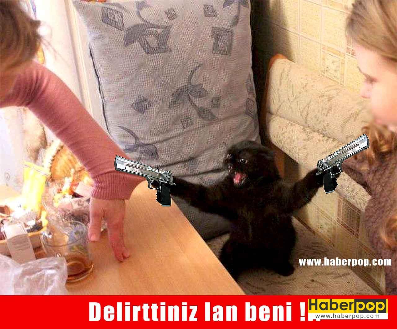 sinirlenip sahiplerine silah çeken öfkeli kedi