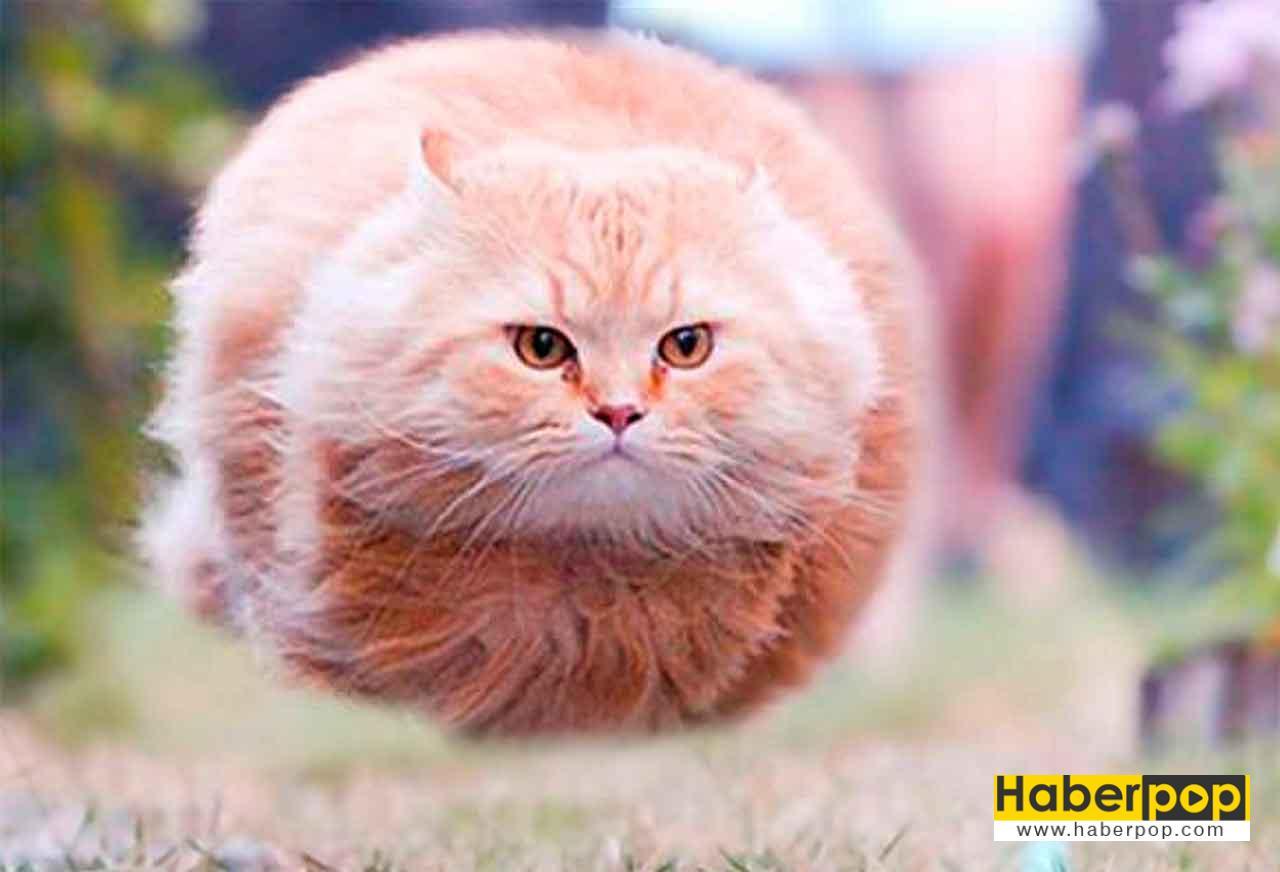 En Güzel 31 Kedi Ve Onların Tatlı şirin Fotoğrafları Haberpop