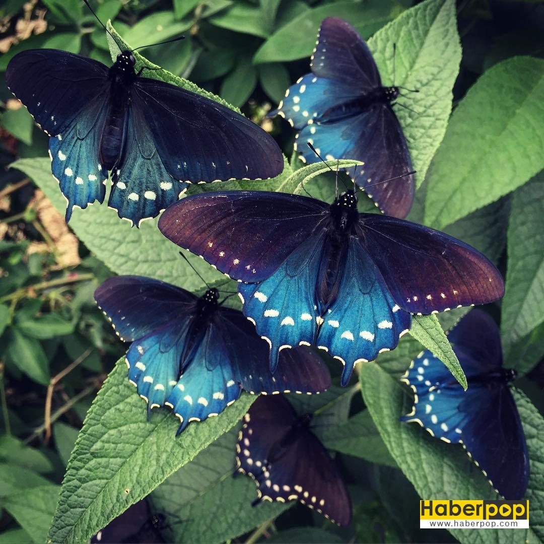 kelebekleri-kurtaran-adam-3-HaberPop
