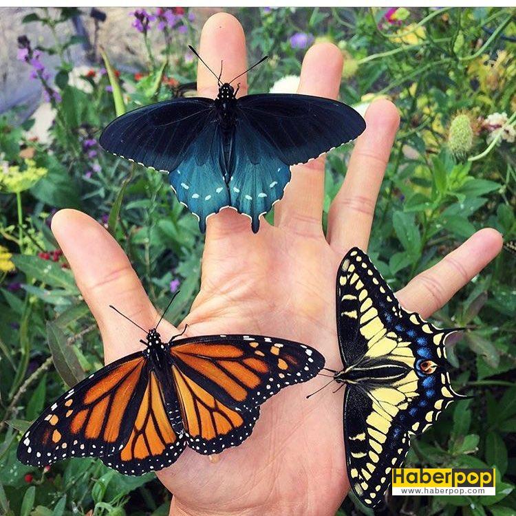 kelebekleri-kurtaran-adam-5-HaberPop