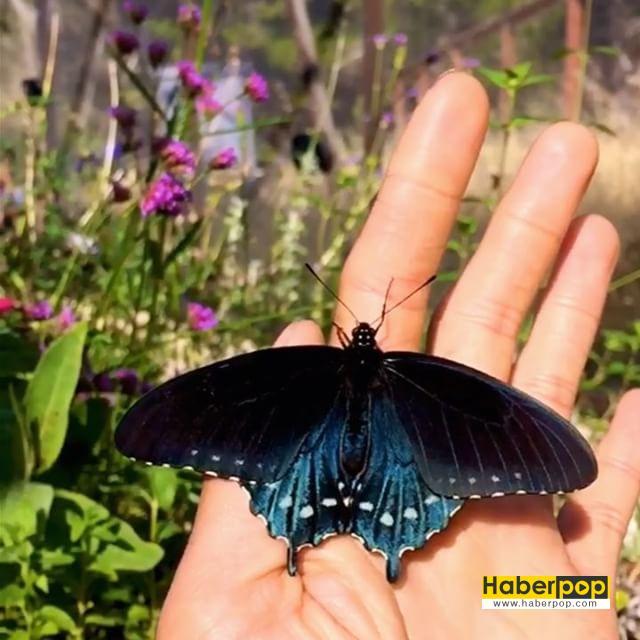 kelebekleri-kurtaran-adam-7-HaberPop