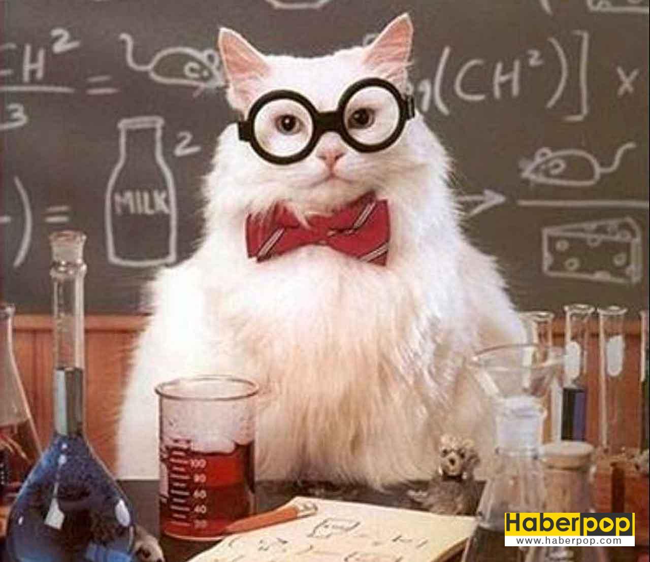 Kimyager kostümü giymiş gözlüklü şirin kedi