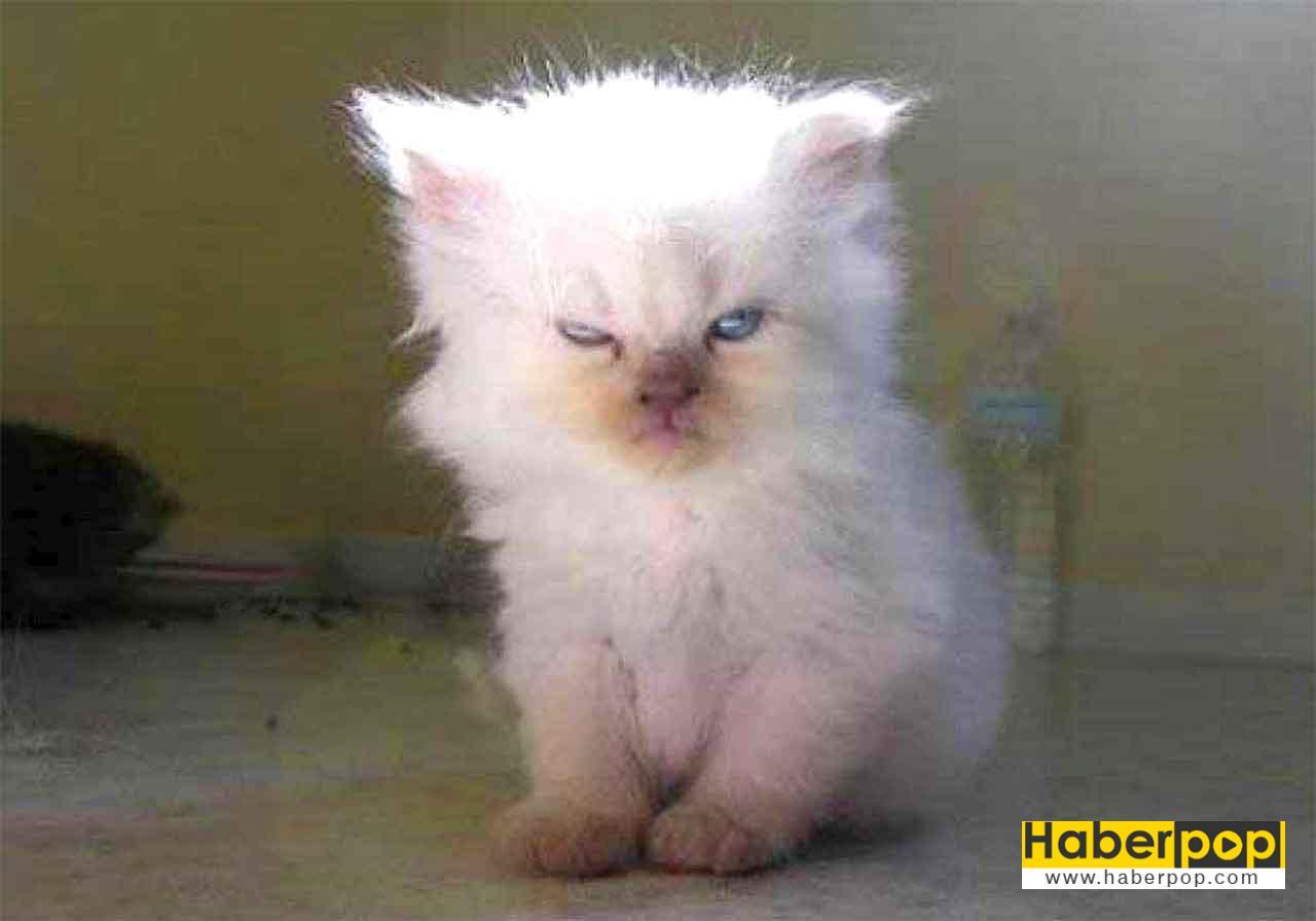 Muhalif sinirli kızgın kedimiz