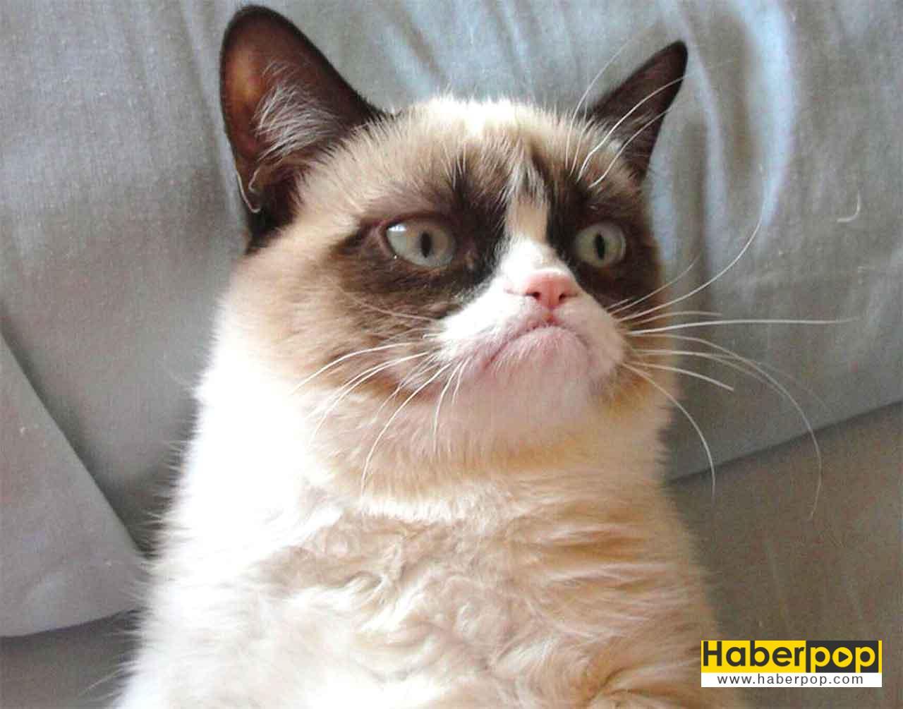 Asık suratlı kızgın kedi Tardar Sauce - Grumpy Cat