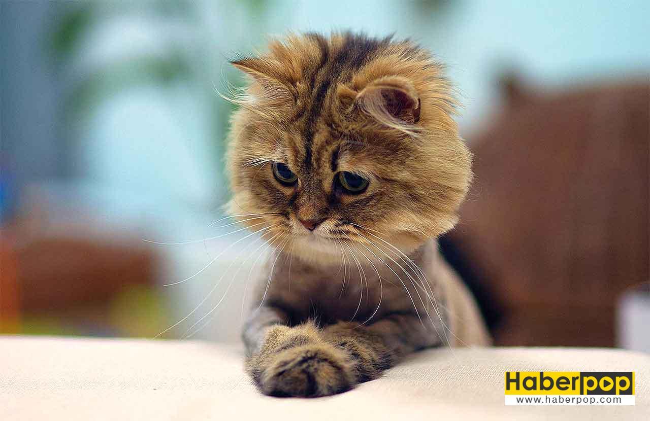 Tüyleri kesilen şirin kedinin ilginç hali